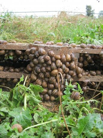 hodowla ślimaków szkolenia